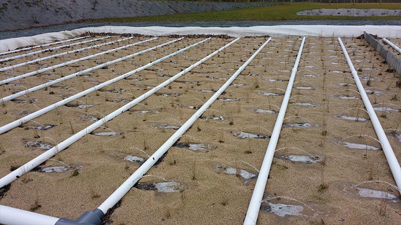 Filtres plantés de roseaux pour l'assainissement d'un chenil